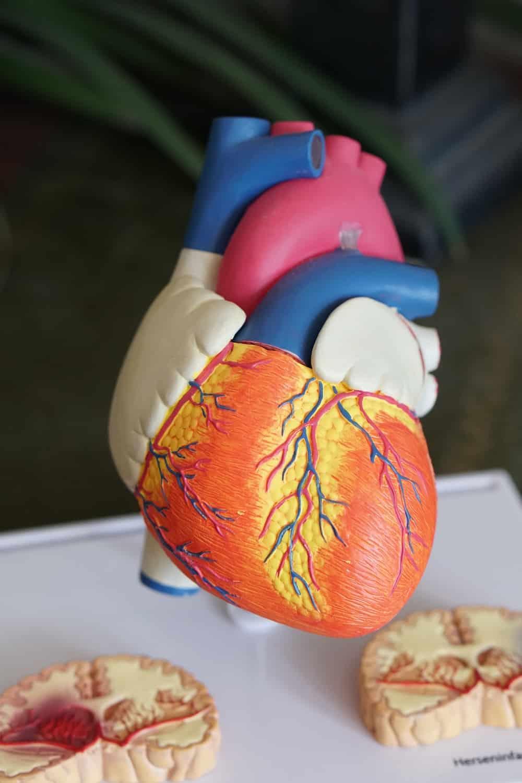image illustrant l'hypertension artérielle